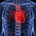 Lipidne frakcije - Klinički značaj, metode određivanja i referentne vrednosti