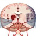 Akutni moždani udar - Šta zdravstveni radnik treba da zna?