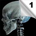 Maksilofacijalne povrede (1)