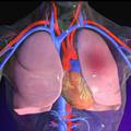 Edem pluća - Savremeni koncept dijagnostike i lečenja
