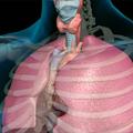 Disajni put i disanje - Uspostavljanje i održavanje