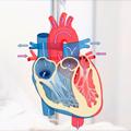 Urgentna kardiovaskularna stanja u dečjem uzrastu - Dijagnostika, terapija, nega