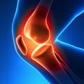 Anatomija i biomehanika - Determinante stabilnosti zgloba kolena