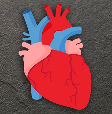 Interakcije kardiovaskularnih lekova (1)